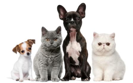 Кошки и собаки уезжают в Германию