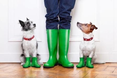 Собаки едут в Германию на постоянное место жительства