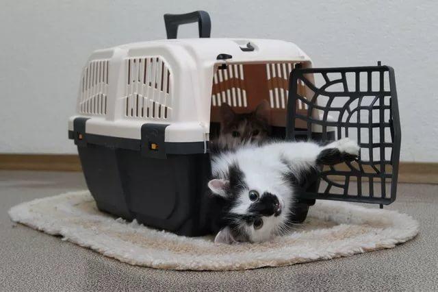 Кошка переезжает в Германию