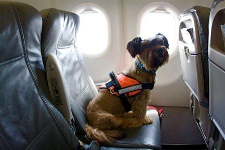 собака в самолёте